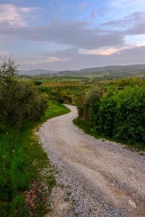 Poggio Olivo country road